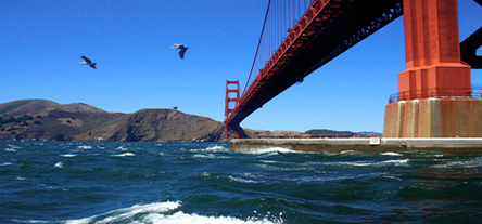 PELICAN DREAMS: real pelicans, dreamy pace – The Movie Gourmet